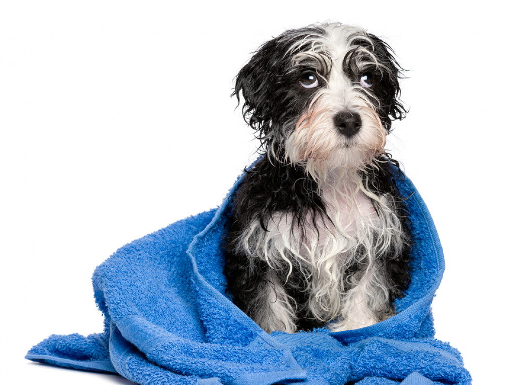 Treat Your Fur Baby to a Full Spa Treatment